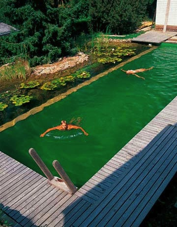 natural swimming pools green home landscape source